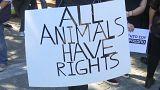 الحيوانات لها حقوق