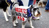 Брексит ужасает собаководов и артистов