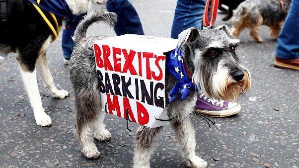 Hunde marschieren gegen Brexit durch London