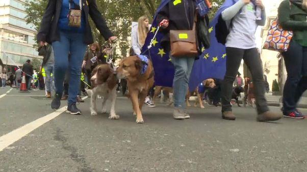 الكلاب البريطانية أيضاً ستعاني بعد بريكسِت وأصحابها يطالبون باستفتاء ثانٍ