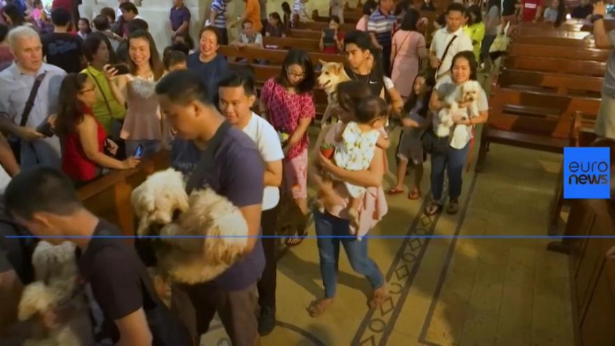 Philippines: pets get blessed in Catholic ceremonies