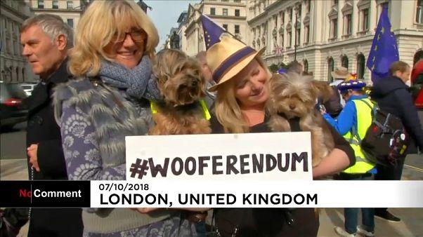 Dog owners demand second Brexit referendum