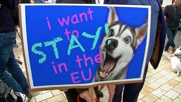 مخالفان برکسیت با سگهایشان در لندن راهپیمایی کردند
