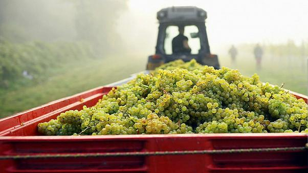 Why this year's boiling summer is good news for English sparkling wine