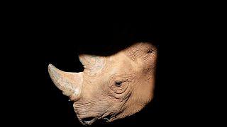 Doğal hayat alarm veriyor: Yaban hayvanları yüzde 60 azaldı
