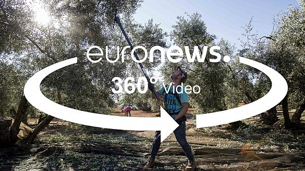Hit hard by Trump tariffs: 360° visits the world's largest olive producer