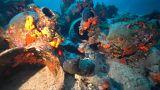 Antiker Schiffsfriedhof in Griechenland entdeckt