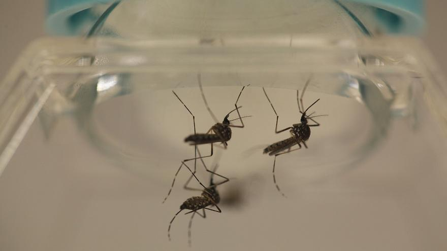 Malaria-carrying mosquitoes could be killed off by gene editing