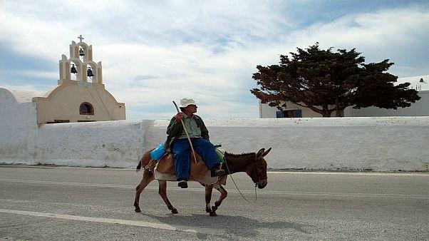 جزيرة يونانية تحظر ركوب الحمير على السياح الزائد وزنهم أكثر من 100 كلغ
