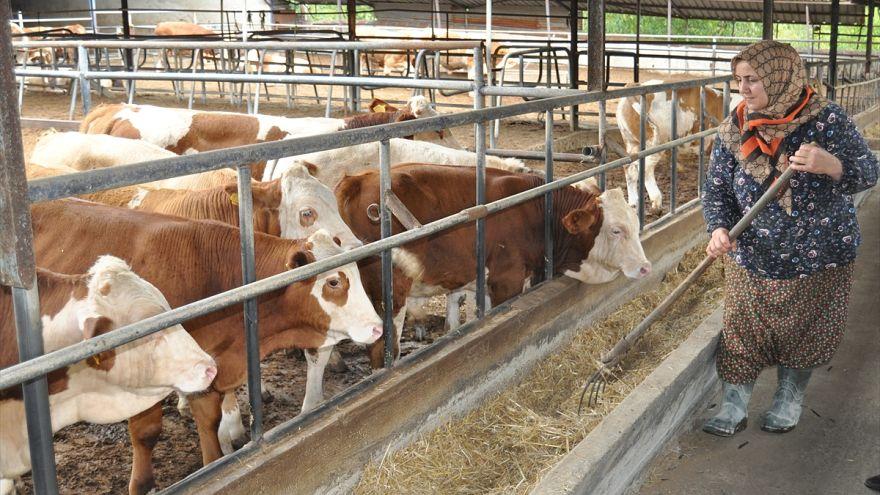 Kırmızı et üreticileri yükselen kesim fiyatlarından memnun