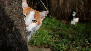 Zelenogradsk, Russia, has approximately 70 stray cats.