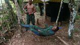 Des ex-guérilleros des FARC dans la forêt française des Landes, possible!