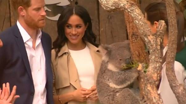 Watch: Prince Harry and Meghan meet koala in Sydney