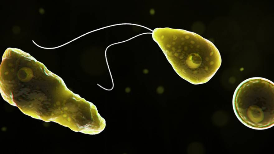 Primer caso de ameba comecerebros en España: ¿Qué es y cómo se contagia?