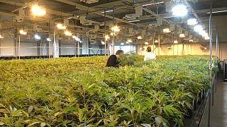 El cannabis es legal en Canadá desde este miércoles