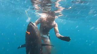 شاهد: صياد أمريكي يناور سمكة تونة عملاقة نادرة