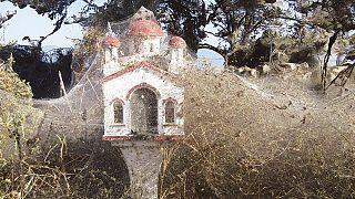 شاهد: شبكة بيوت عنكبوت كثيفة على طول كيلومتر كامل