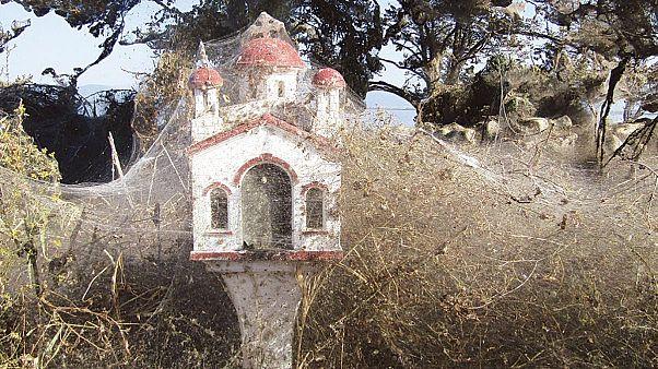 Ιστός αράχνης ενός χλμ. στη λίμνη Βιστωνίδα