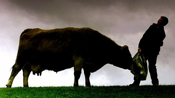Scottish government confirms case of mad cow disease in Aberdeenshire