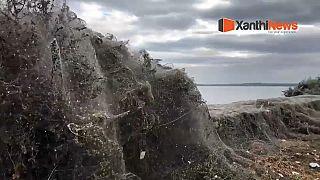 Gespenstische 1.000-Meter-Netze: Spinnen haben wieder zugeschlagen