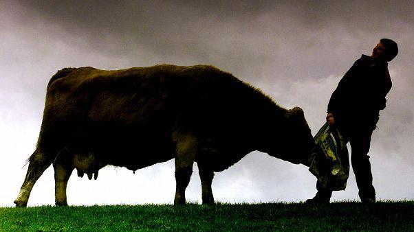 Escocia confirma un caso de vaca loca en una granja