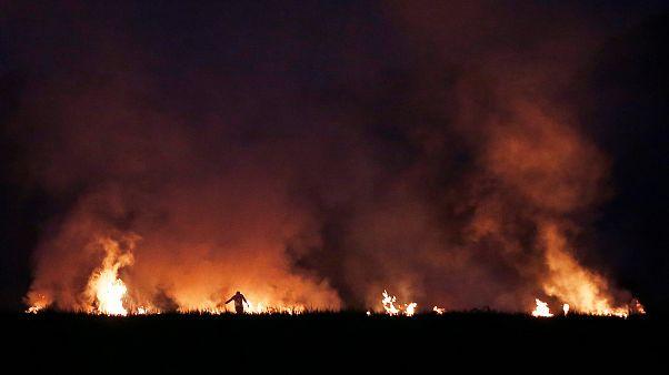 Hindistan'ın Haryana eyaletinde ateşe verilen bir pirinç tarlası
