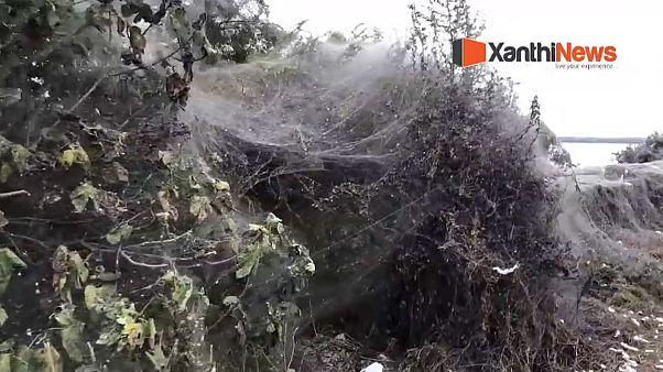 Video - Yunanistan'da 1 km uzunluğunda dev örümcek ağı