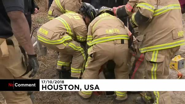 EUA: Equipa resgata pónei de um ralo de drenagem