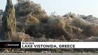 Watch: Giant spider web envelops coastline of Greek lake