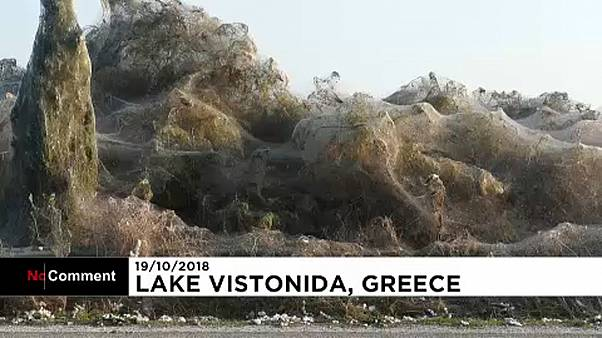 Watch: Giant spider web envelops coastline of Greek lake