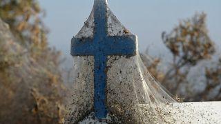 Un manto de telarañas cubre un lago en Grecia