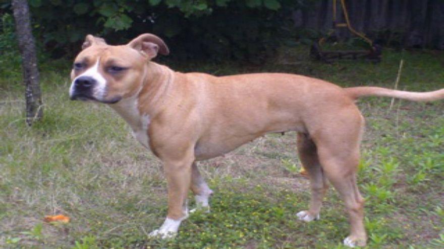 شاهد: شرطي يقتل كلبا بالرصاص يثير الجدل في فرنسا