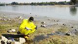 Mérgek csorognak a Dunába Óbudán a Greenpeace szerint
