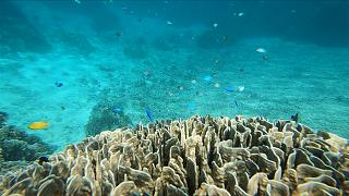 Ishigaki's Blue Coral one of Okinawa's must-see adventures