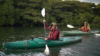 Trek et kayak dans la nature sauvage de l'île japonaise d'Iriomote