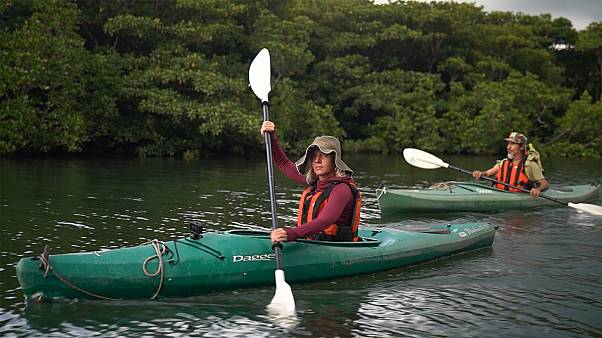 Ilha de Iriomote, o paraíso para canoagem e caminhada