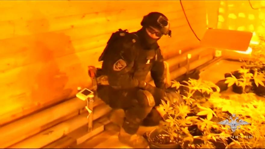 Russia: sequestrata coltivazione di marijuana ad Arcangelo, 3 arresti