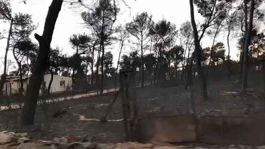 Incêndios na Grécia: voluntários da Cruz Vermelha fazem buscas