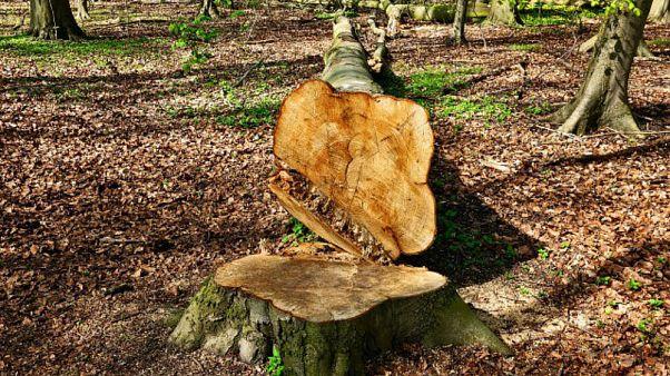 Kendi arazilerindeki ağaçları kesen kardeşlere yarım milyon dolar ceza