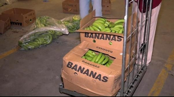 Descubiertas varias toneladas de cocaína en Málaga ocultas en bananas