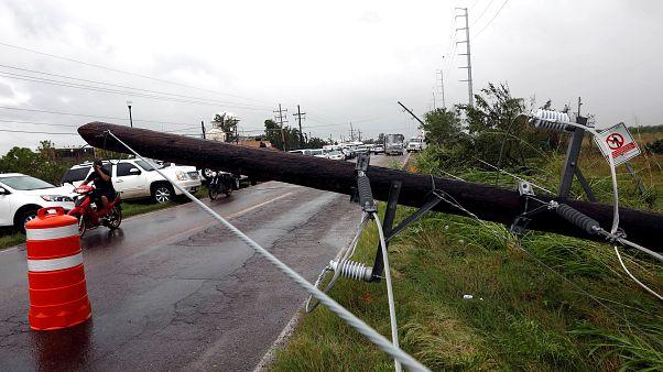 Un árbol caído en el municipio de Escuinapa