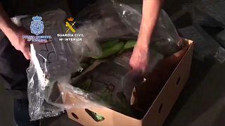 Spanien: Polizei findet 6 Tonnen Kokain in Bananen-Lieferung