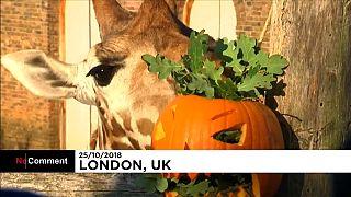 Allo zoo di Londra è già Halloween