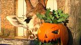 شاهد: حديقة حيوانات لندن تستقبل يقطينات الهالوين المزخرفة
