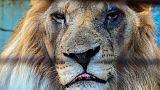 """Animales desesperados y abandonados en el """"peor zoo"""" de Europa"""