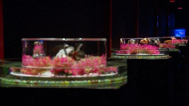نمایشگاه تنگ ماهی قرمز؛ وقتی تاریخ و هنر تلفیق میشوند