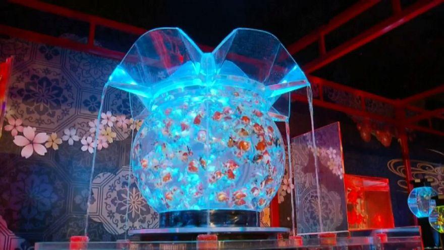 شاهد: جمال أخاذ للأسماك الذهبية في عرض ياباني للأحواض المائية