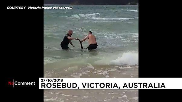 Bu kanguru hayatını polise borçlu