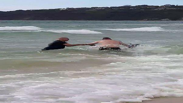 Polizisten retten Känguru aus dem Meer