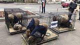 """К редакции  """"Новой газеты"""" подбросили клетки с живыми овцами"""